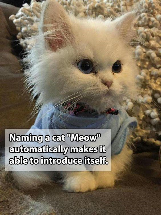 """Cat - Naming a cat """"Meow"""" automatically makes it able to introduce itself."""