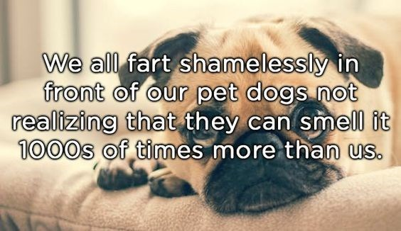 Text - We all fart shamelessly in front of our pet dogs not realizing that they can smell it 1000s of times more than us.