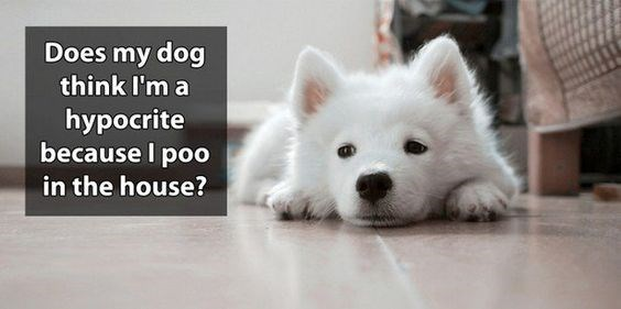 Mammal - Does my dog think I'm a hypocrite because I poo in the house?