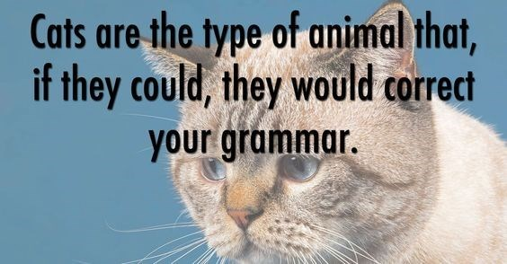 Cat - Cats are the type of animal that, if they could, they would correct your grammar.