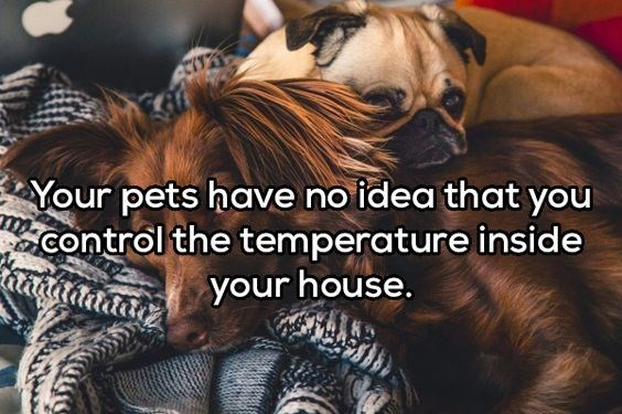 Canidae - Your pets have no idea that you control the temperature inside your house.