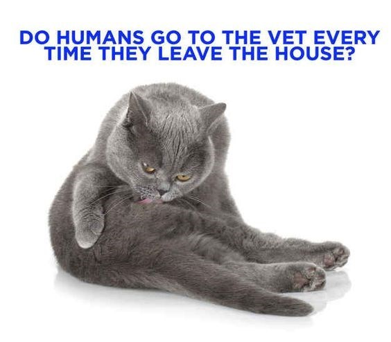 Cat - DO HUMANS GO TO THE VET EVERY TIME THEY LEAVE THE HOUSE?