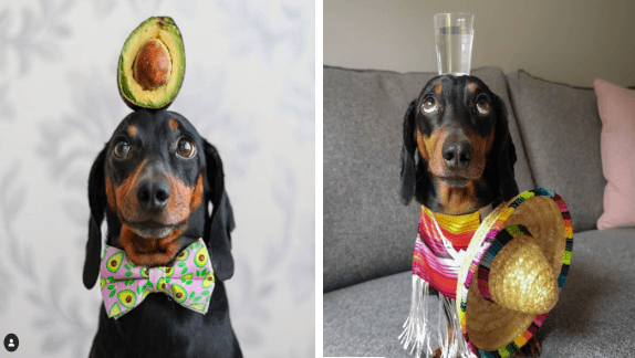 dogs dachshund dog photos funny dogs balancing animals - 9487877