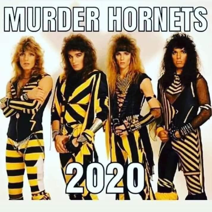 Album cover - MURDER HORNETS 2020