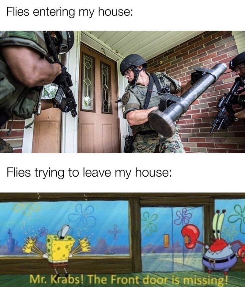 Photo caption - Flies entering my house: Flies trying to leave my house: Mr. Krabs! The Front door is missing!