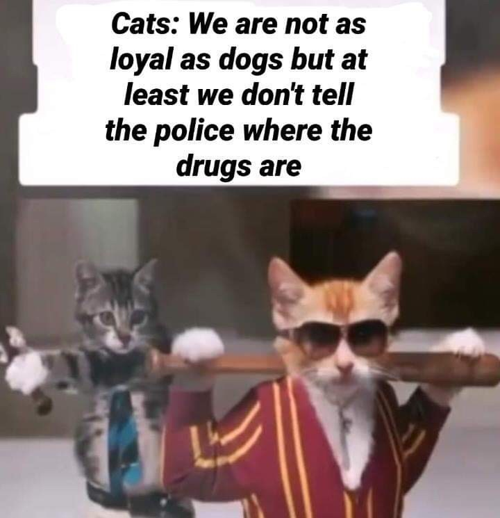 Cat - Cats: We are not as loyal as dogs but at least we don't tell the police where the drugs are