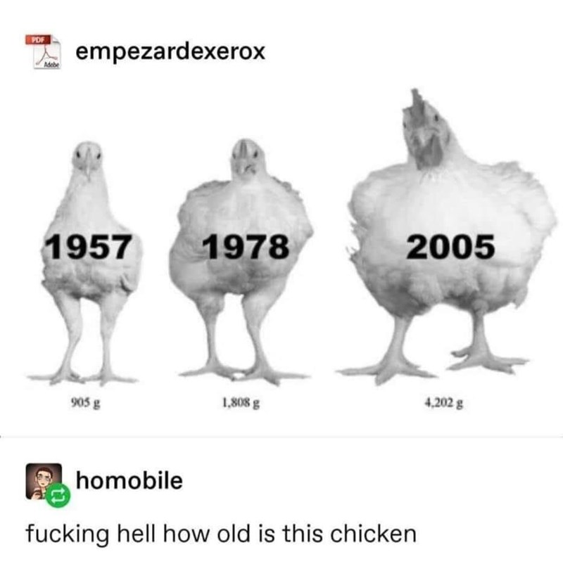 Chicken - PDF empezardexerox Adebe 1957 1978 2005 905 g 1,808 g 4,202 g homobile fucking hell how old is this chicken