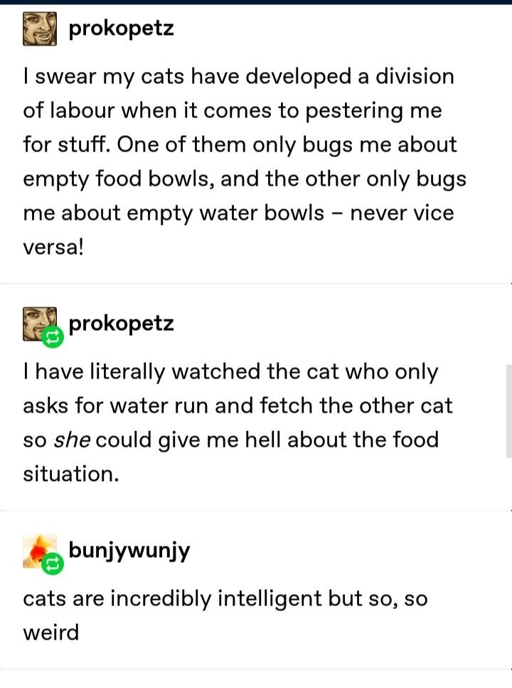 I swear my cats have developed a division of labour when it comes to pestering me for stuff. One of them only bugs me about empty food bowls, and the other only bugs me about empty water bowls — never vice versa!