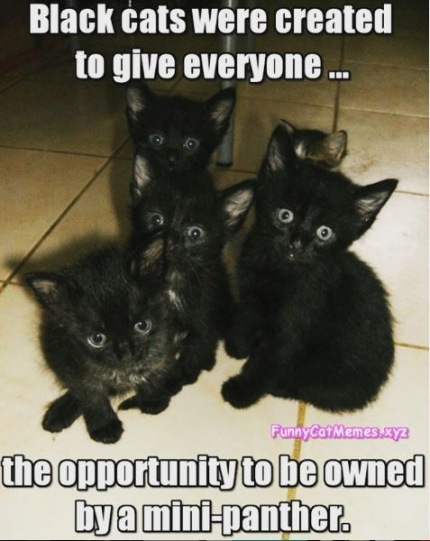 Cat - Black ćats were created to give everyone . FunnyCat Memes.xz the opportunity to be owned bya mini-panther.