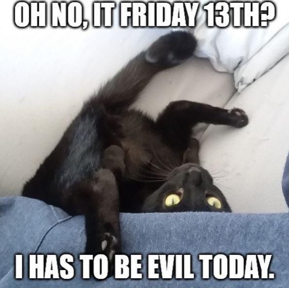 Photo caption - OH NO, IT FRIDAY 13TH? I HAS TO BE EVIL TODAY.