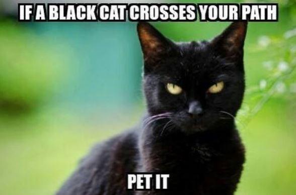 Cat - IFA BLACK CAT CROSSES YOUR PATH PET IT