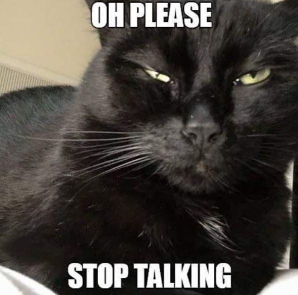 Cat - OH PLEASE STOP TALKING