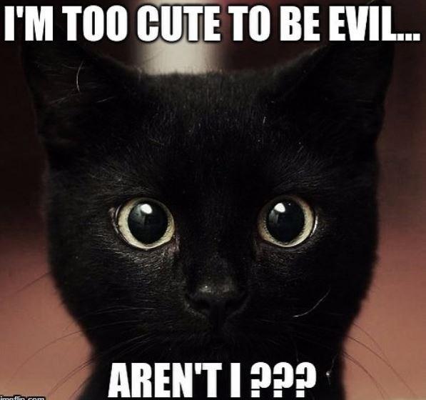 Cat - I'M TOO CUTE TO BE EVIL. AREN'T I ??? imaflin com