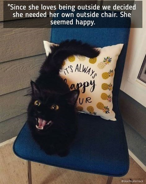 """Cat - """"Since she loves being outside we decided she needed her own outside chair. She seemed happy. ALWAYS IT'S haapy UR @blackcatsrrock"""