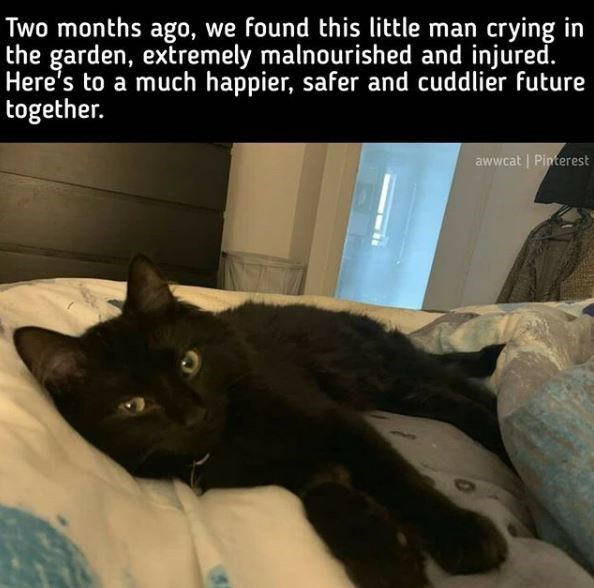 Cat - Two months ago, we found this little man crying in the garden, extremely malnourished and injured. Here's to a much happier, safer and cuddlier future together. awwcat | Pinterest