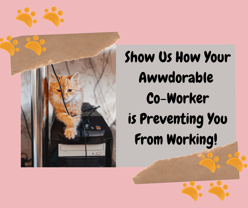 Product - Show Us How Your Awwdorable Co-Worker is Preventing You From Working!