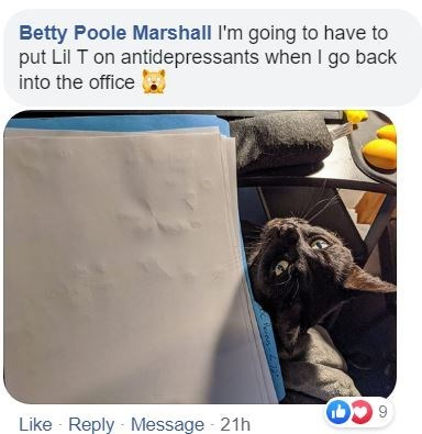 Technology - Betty Poole Marshall I'm going to have to put Lil T on antidepressants when I go back into the office Like - Reply - Message - 21h