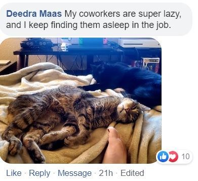 Wildlife - Deedra Maas My coworkers are super lazy, and I keep finding them asleep in the job. OL CO Like Reply - Message 21h - Edited