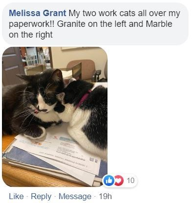 Cat - Melissa Grant My two work cats all over my paperwork!! Granite on the left and Marble on the right Like - Reply - Message - 19h OL CO