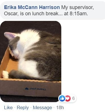 Cat - Erika McCann Harrison My supervisor, Oscar, is on lunch break... at 8:15am. Thank you! Like Reply Message 18h