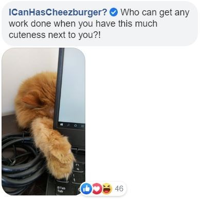 Fur - ICanHasCheezburger? O Who can get any work done when you have this much cuteness next to you?! STab Tab