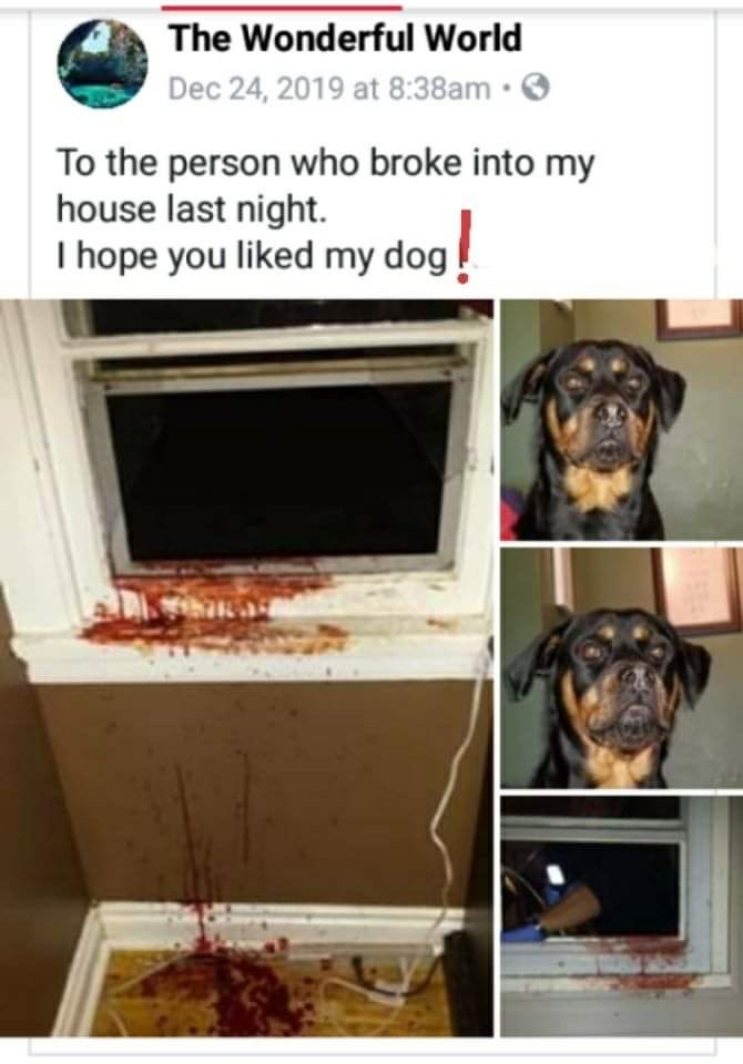 Canidae - The Wonderful World Dec 24, 2019 at 8:38am ·O To the person who broke into my house last night. I hope you liked my dog!