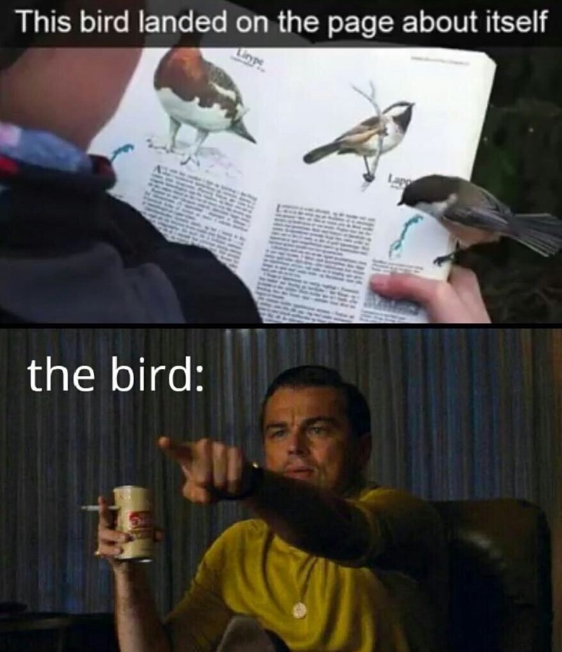 Bird - This bird landed on the page about itself the bird: