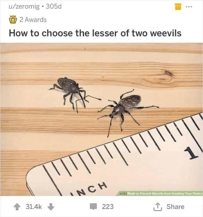 Insect - u/zeromig • 305d 2 Awards How to choose the lesser of two weevils INCH wiki How to PywwWevie trom tding Your Patry 31.4k 223 1, Share