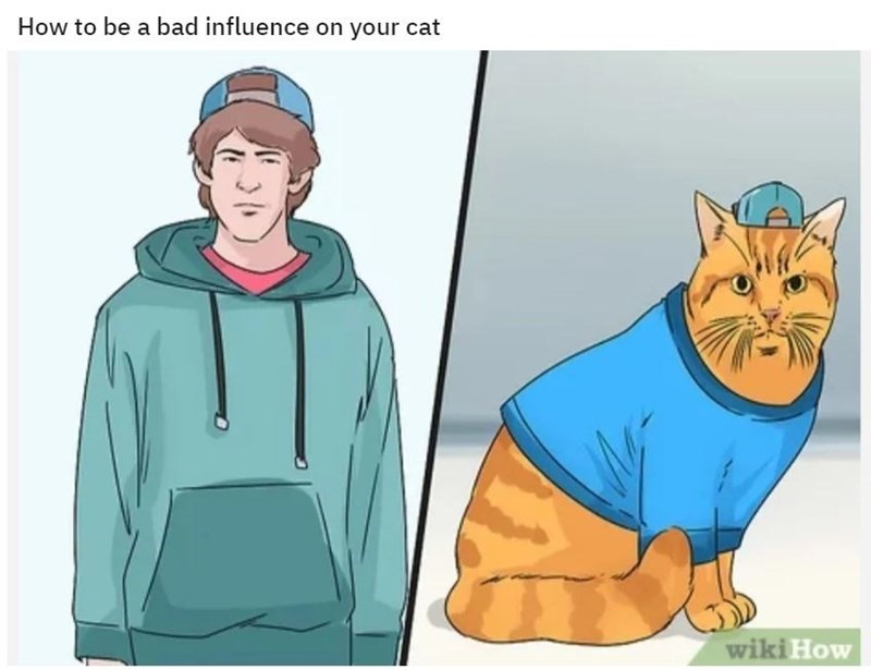 Cartoon - How to be a bad influence on your cat wiki How