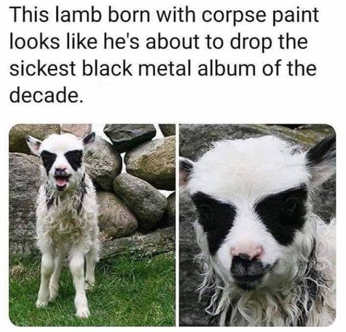 Mammal - This lamb born with corpse paint looks like he's about to drop the sickest black metal album of the decade.
