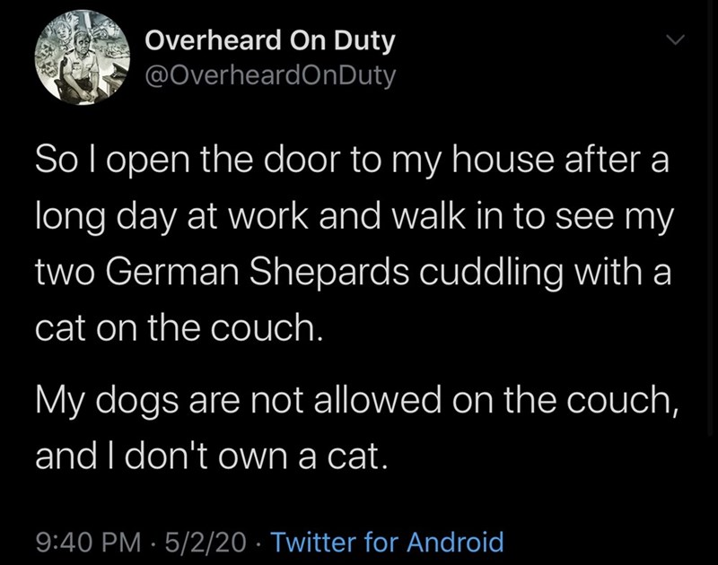 Text - Overheard On Duty @OverheardOnDuty Sol open the door to my house after a long day at work and walk in to see my two German Shepards cuddling with a cat on the couch. My dogs are not allowed on the couch, and I don't own a cat. 9:40 PM · 5/2/20 · Twitter for Android