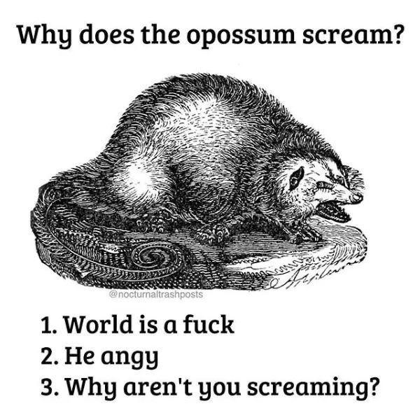 Head - Why does the opossum scream? @nocturnaltrashposts 1. World is a fuck 2. He angy 3. Why aren't you screaming?