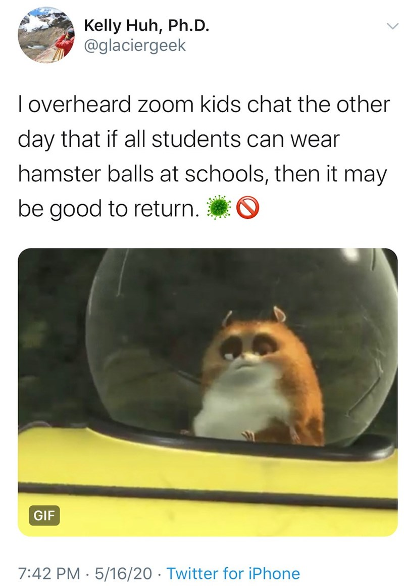Hamster - Kelly Huh, Ph.D. @glaciergeek I overheard zoom kids chat the other day that if all students can wear hamster balls at schools, then it may be good to return. GIF 7:42 PM · 5/16/20 · Twitter for iPhone