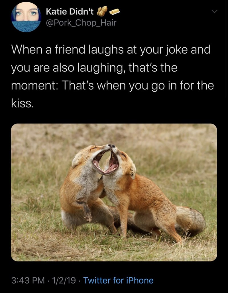 Wildlife - Katie Didn't @Pork_Chop_Hair When a friend laughs at your joke and you are also laughing, that's the moment: That's when you go in for the kiss. 3:43 PM · 1/2/19 · Twitter for iPhone