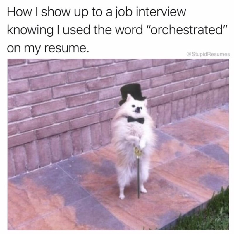 "Mammal - How I show up to a job interview knowing I used the word ""orchestrated"" on my resume. @StupidResumes"