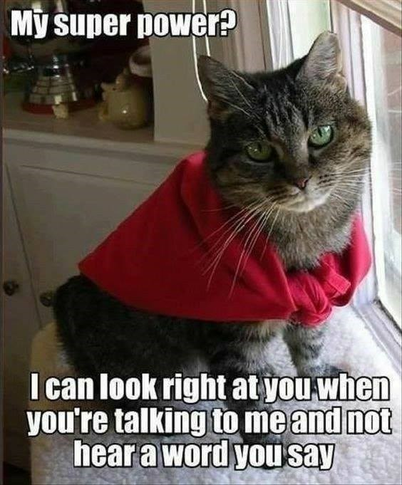 Cat in a red cape My super power? I can look right at you when you're talking and not hear a word you