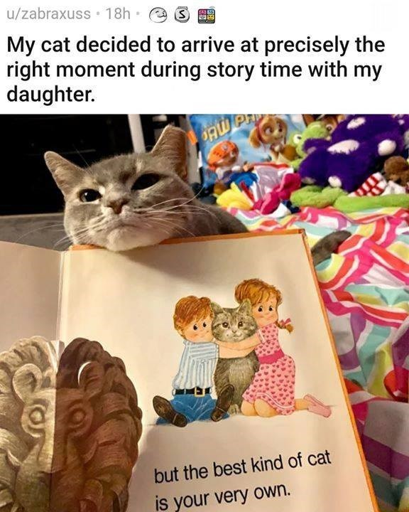 My cat decided to arrive at precisely the right moment during story time with my daughter. but the best kind of cat is your very own.