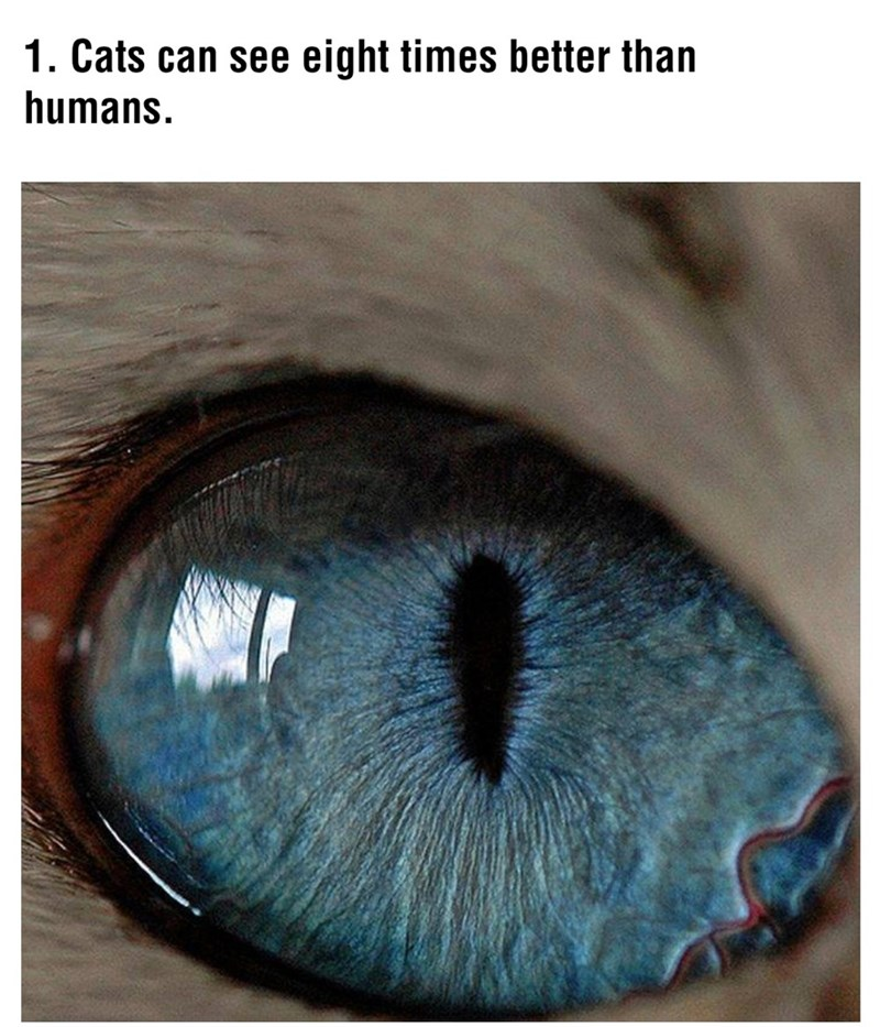 Iris - 1. Cats can see eight times better than humans.
