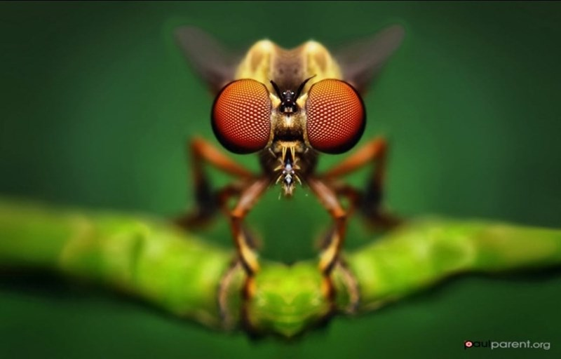 Insect - parent.org