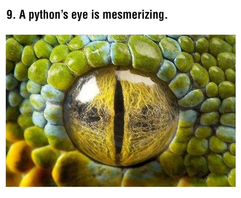 Fruit - 9. A python's eye is mesmerizing.