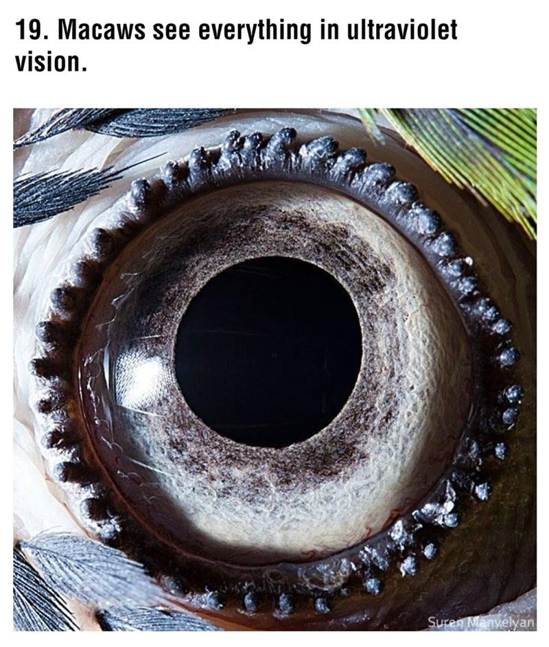 Eye - 19. Macaws see everything in ultraviolet vision. Suren Manyelyan
