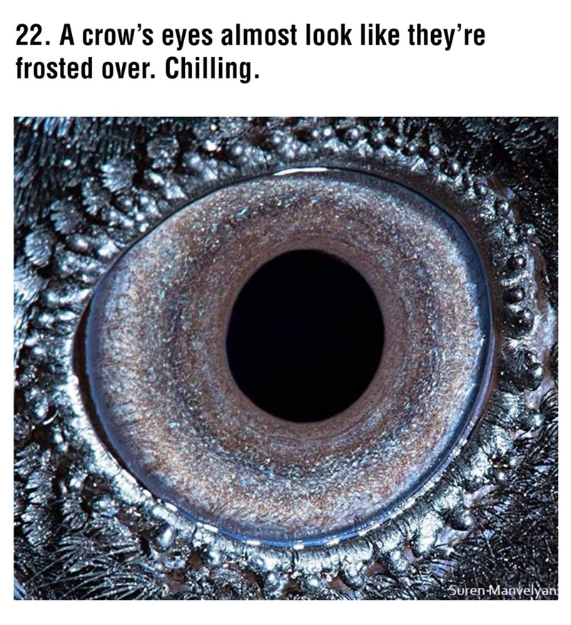 Eye - 22. A crow's eyes almost look like they're frosted over. Chilling. Suren Manvelyan