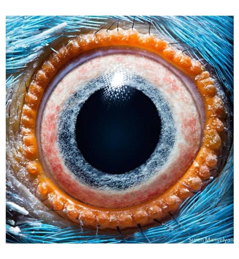Eye - Suren Manvelyan