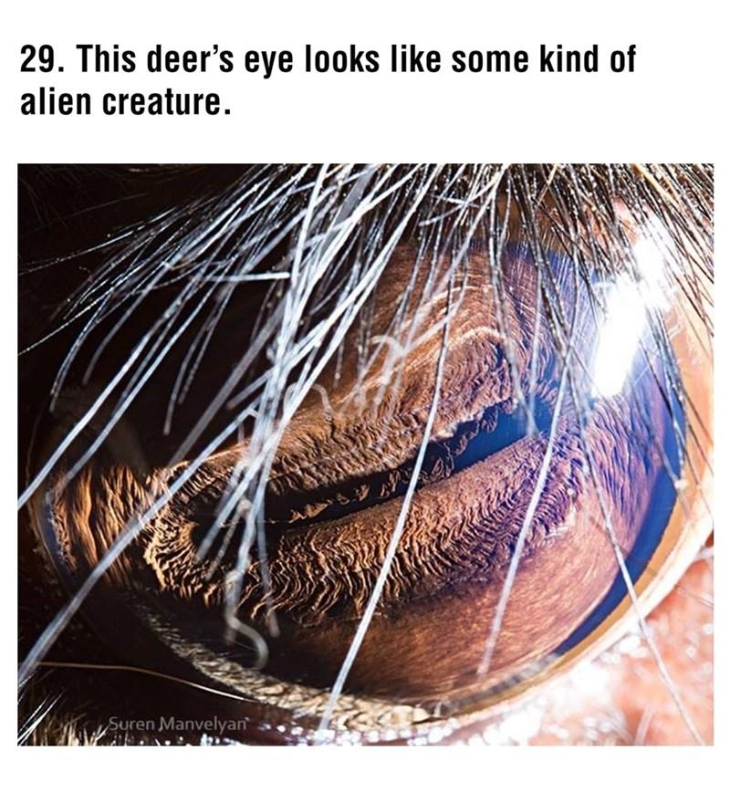 Hair - 29. This deer's eye looks like some kind of alien creature. Suren Manvelyan