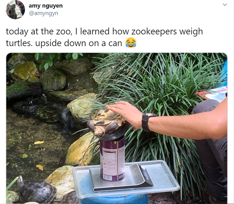 Water - amy nguyen @amyngyn today at the zoo, I learned how zookeepers weigh turtles. upside down on a can >