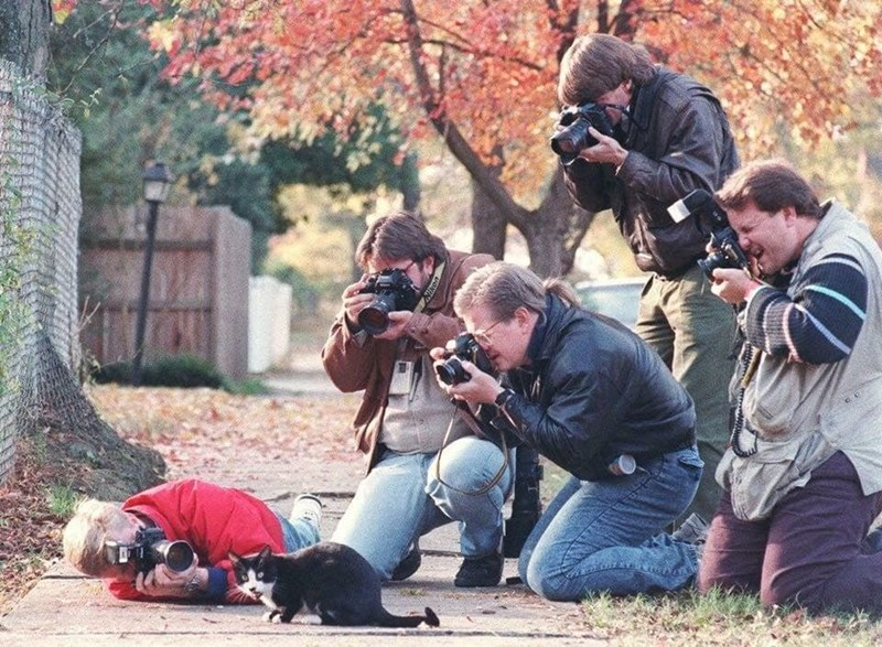 funny pic of multiple photographers surrounding a cat on the street taking pics of it like paparazzi
