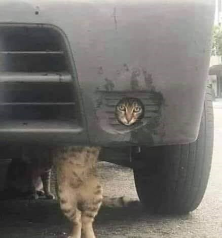 funny pic of a cat looking out through a hole in the back of a car while another cat climbs under it making it look like one long cat