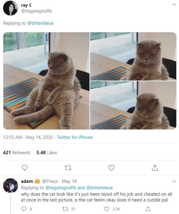 Cat - ray C @tegansgiraffe Replying to @bitterbleue 12:55 AM May 14, 2020 - Twitter for iPhone 421 Retweets 5.4K Likes adam @fleqa · May 14 Replying to @tegansgiraffe and @bitterbleue why does the cat look like it's just been layed off his job and cheated on all at once in the last picture, is the cat feelin okay does it need a cuddle pal 27 51 2.3K >