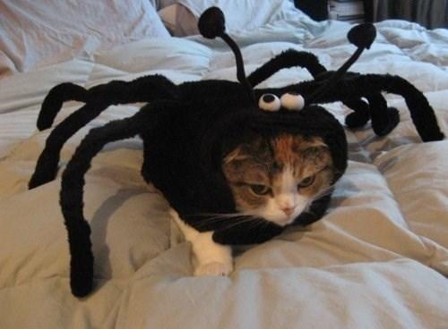 cats in halloween