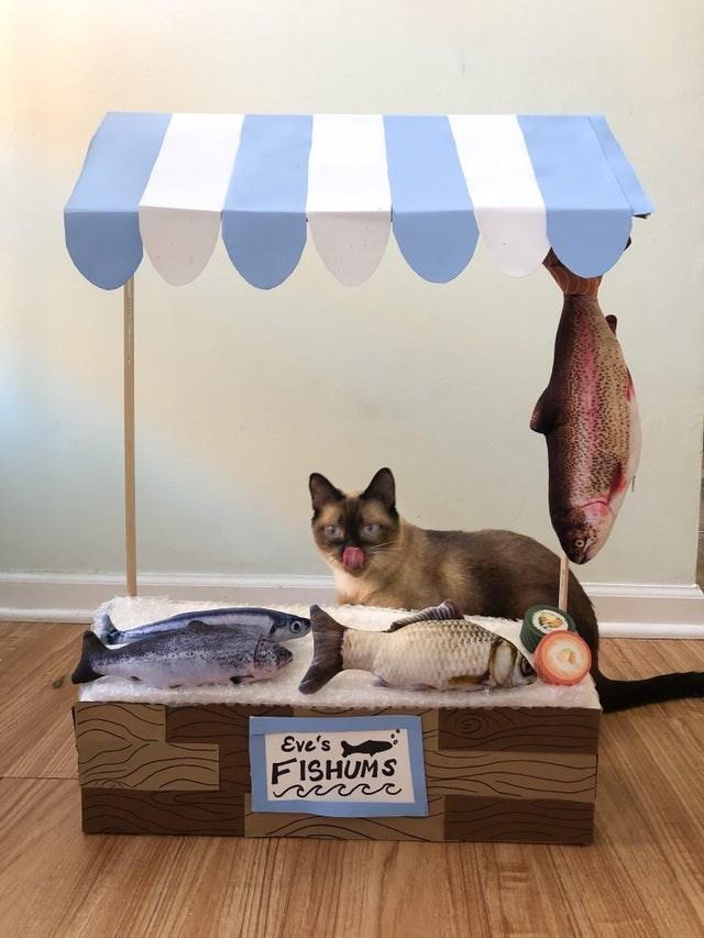 Cat - Eve's FISHUMS